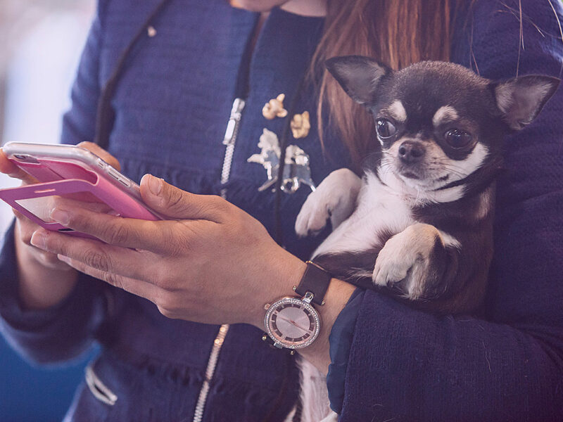 40 Percent of Americans Would Give Up Their Dog Over Their Phone